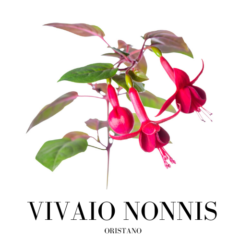 Vivaio Nonnis - Oristano
